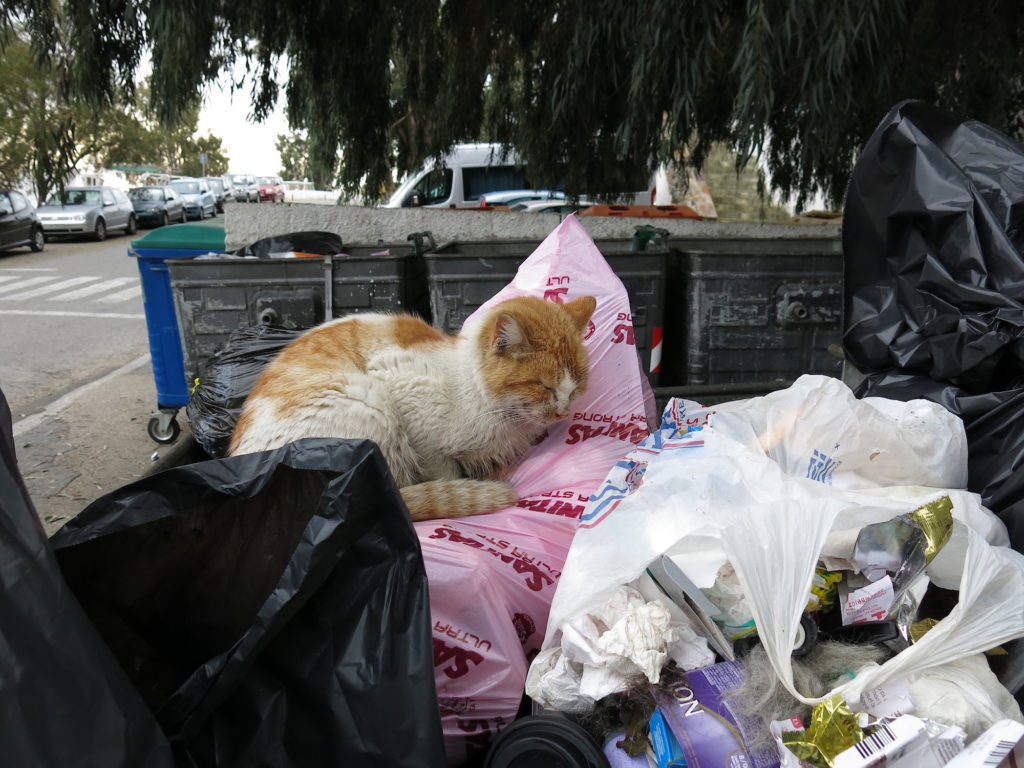 Cat in dumpster