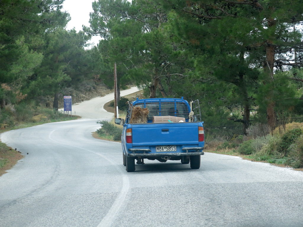 Pickup with goatskin and wine