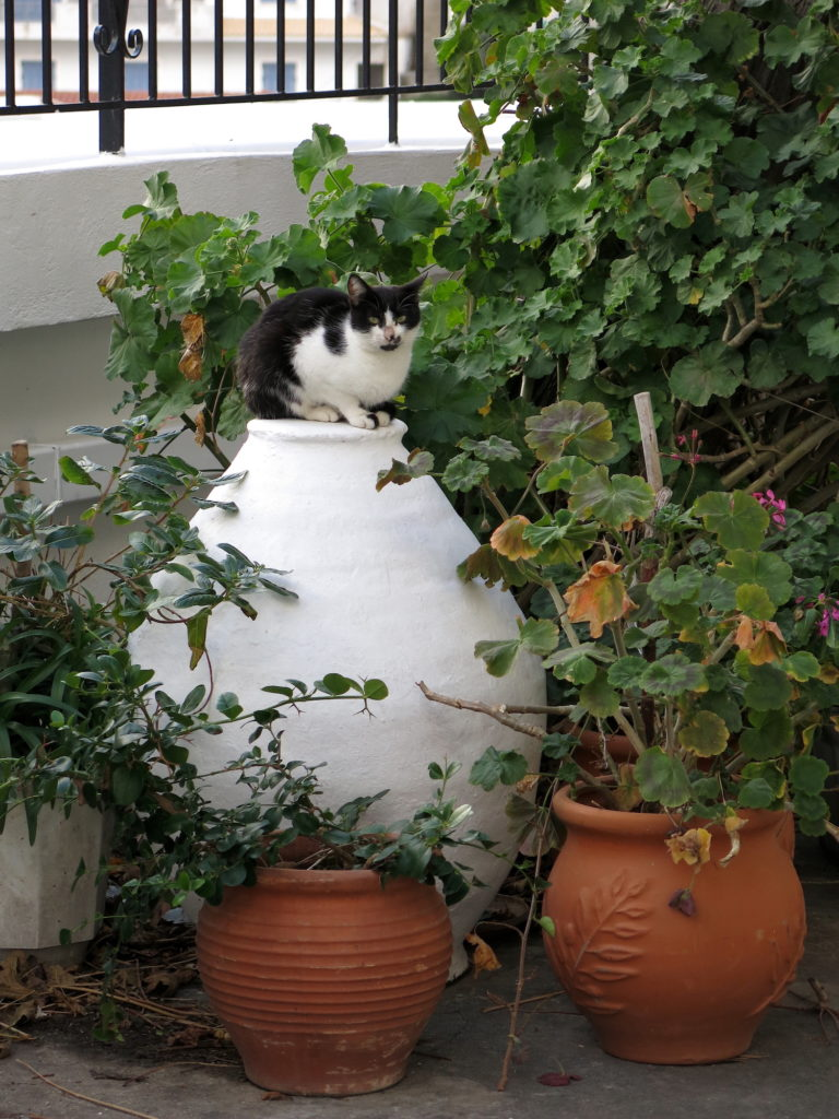 Cat On Amphora